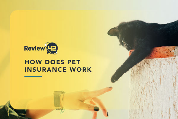 How Does Insurance for Pets Work [Pet Insurance Coverage & Cost]