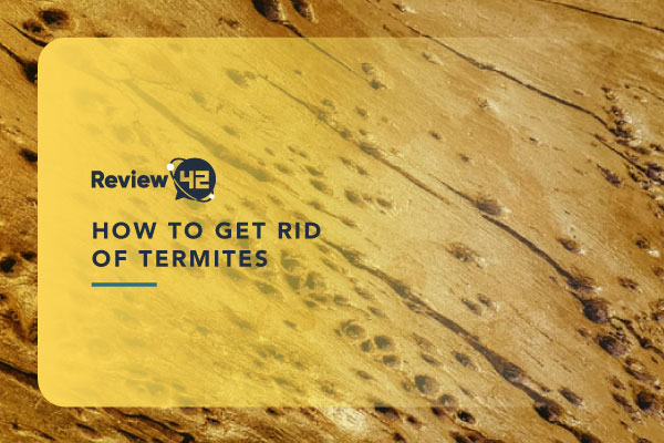 Ways to Kill Termites [Different Types, Signs & the Cost]